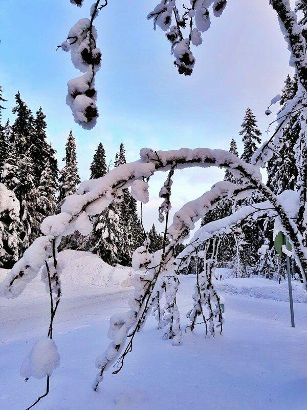Зима была прекрасна и чиста