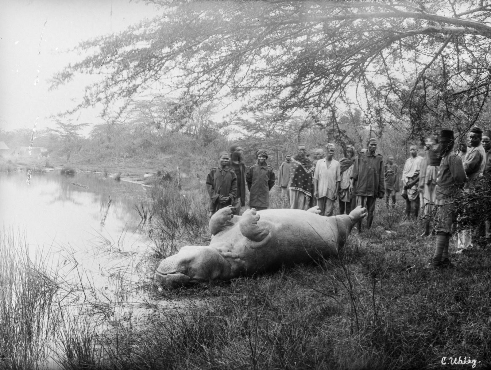 131. Вид убитого охотниками гиппопотама (в суахили Кибоко), вокруг которого собралась толпа