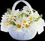 в подарок цветы
