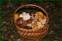 http://img-fotki.yandex.ru/get/112678/15842935.33c/0_e5ac4_df93064e_orig.png