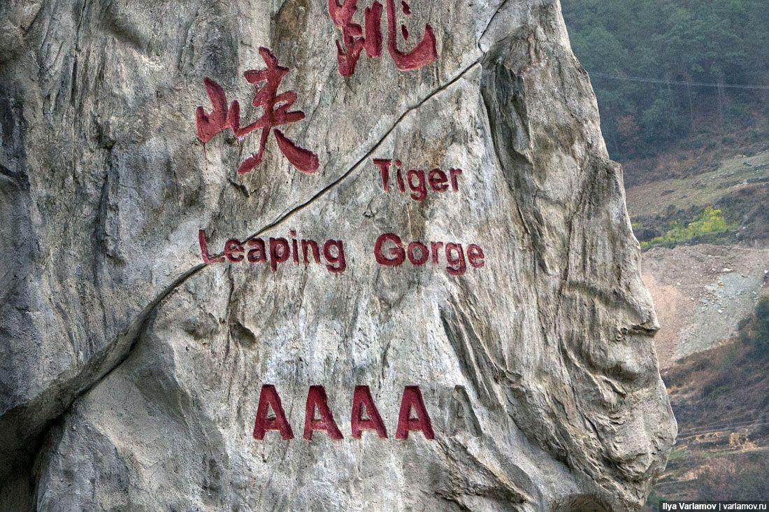 Больше тигров!