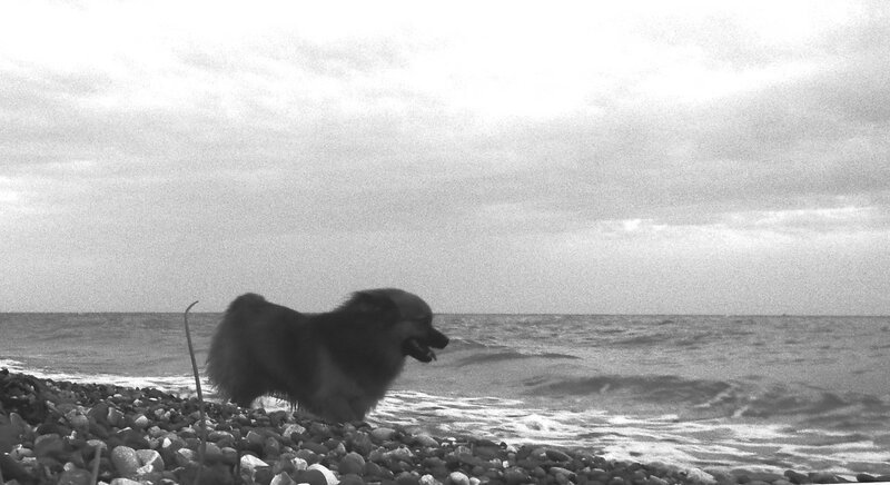 У моря друг ... SAM_0162 - 01.JPG