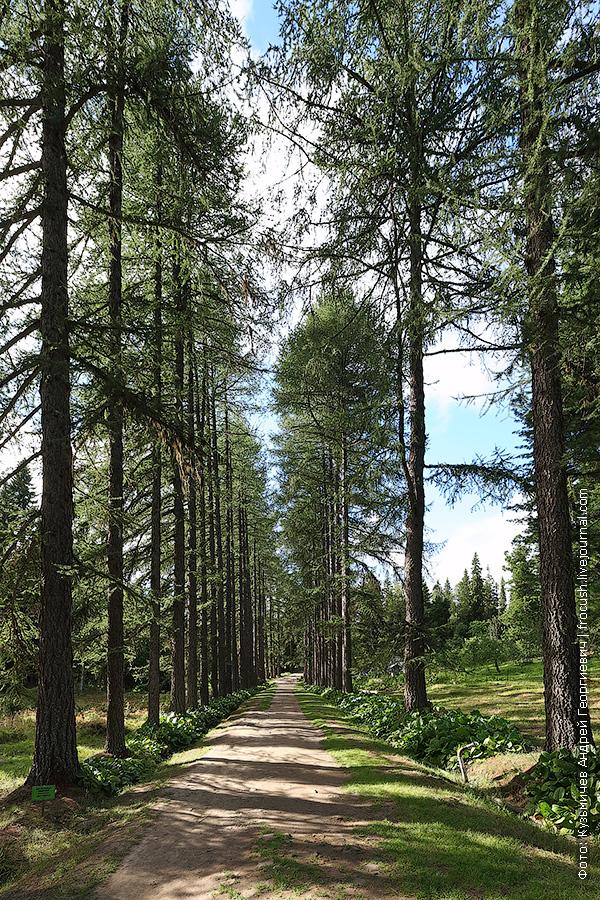 Соловки самый северный ботанический сад