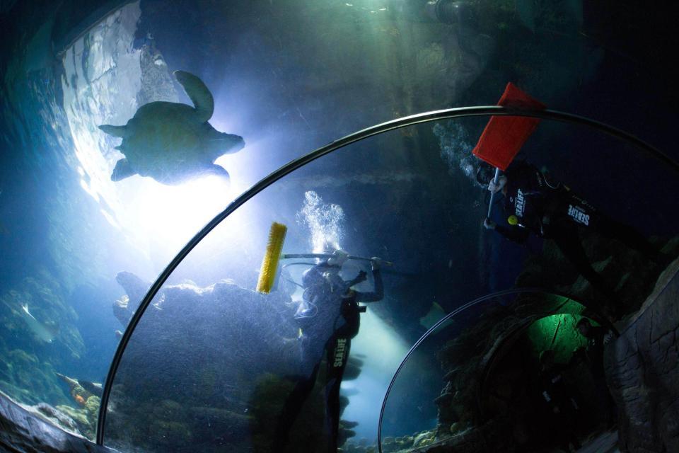 Непростая работа: чистка аквариумов с хищниками