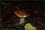 http://img-fotki.yandex.ru/get/112776/15842935.37d/0_eab72_ec578050_orig.jpg