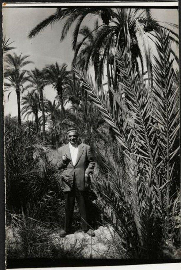 1957. Брассай  в пальмовой роще