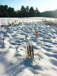 Кочки под снежным одеялом.