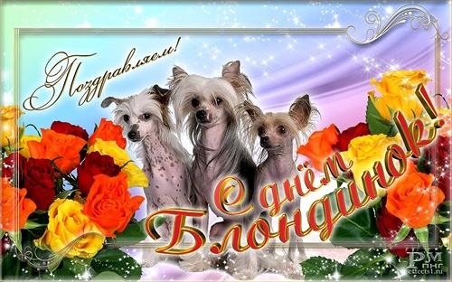 Открытки. 31 мая Международный день блондинок! Поздравляем! Три собачки, цветы
