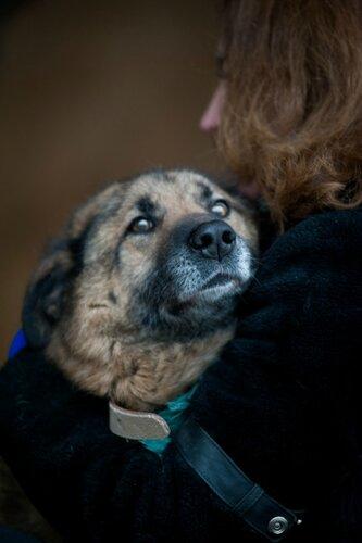Сэм собака из приюта москва