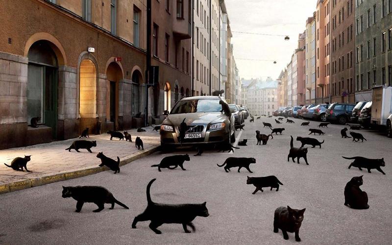 4. Черная кошка Каждый знает, что если дорогу перебежит черная кошка, то не миновать беды. Эта приме