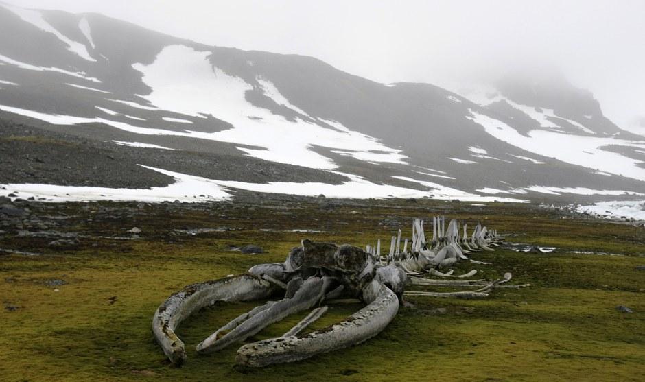 Ледниковый покров в Антарктиде содержит около 80 % всех пресных вод планеты; если он полностью