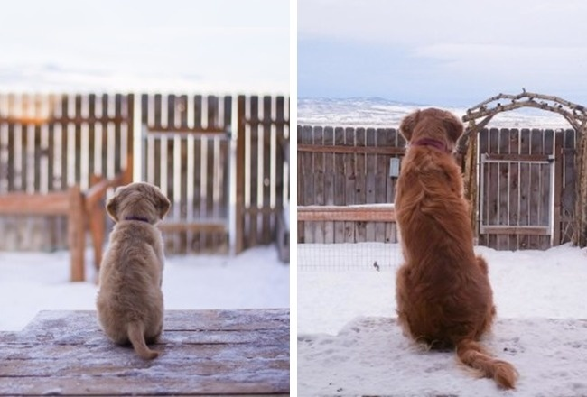 14очаровательных щенков, которые выросли слишком быстро (14 фото)