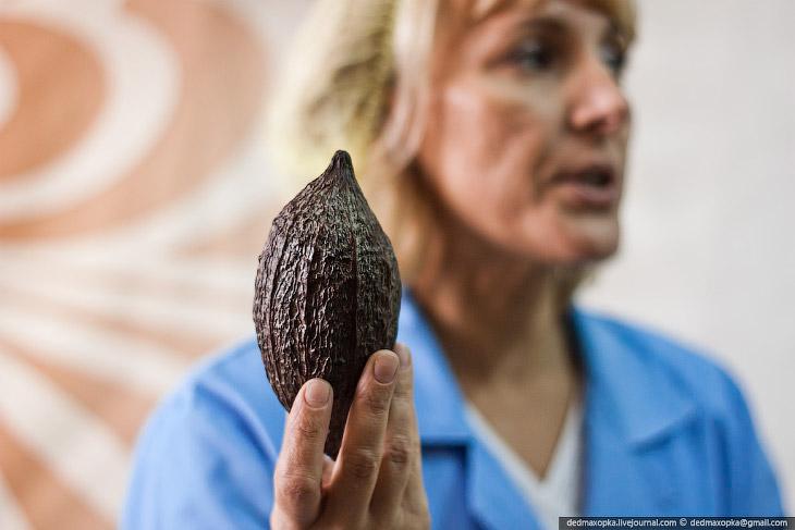 То, из чего делают шоколад. Привозят из республики Кот-д'Ивуар, между прочим: