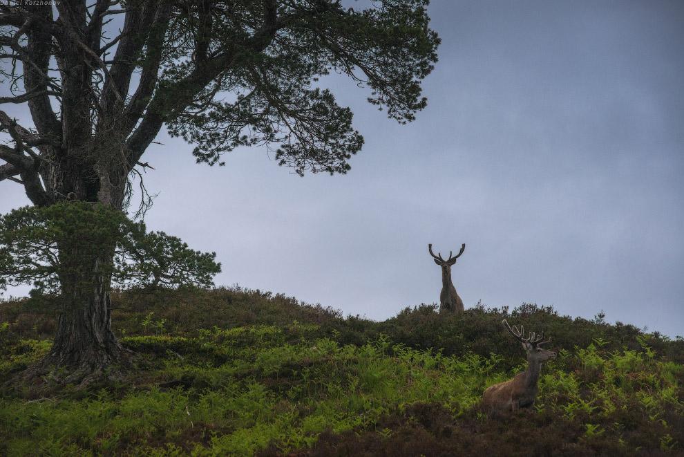 Мне порой кажется, что именно здесь, в «Африке» — сердце Шотландии. Настолько здесь тихо, споко