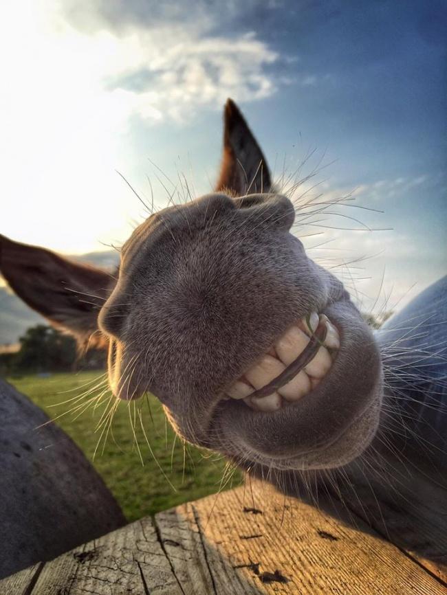 © donkeywhispererfarm2010.wordpress.com   ...Небольшого, ноуютного домика
