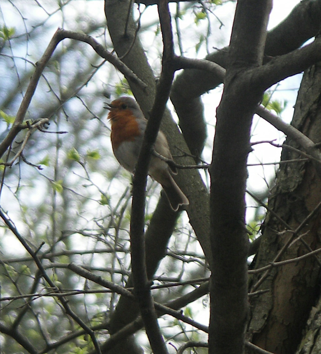 птичка поёт