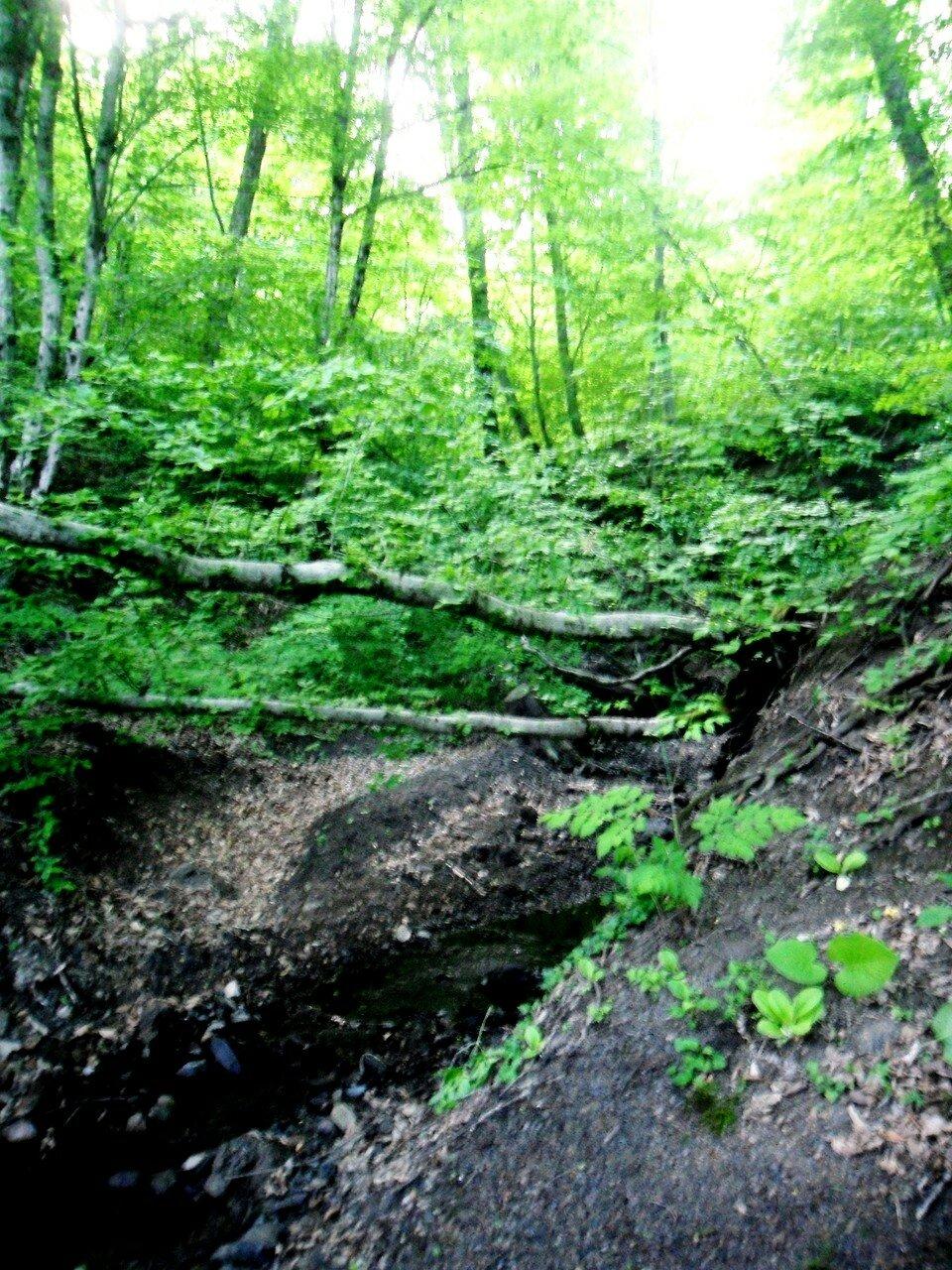 В горных лесах ... SAM_6649.JPG
