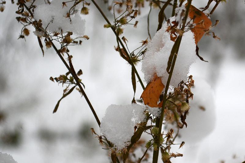 цветы в снегу 30.jpg