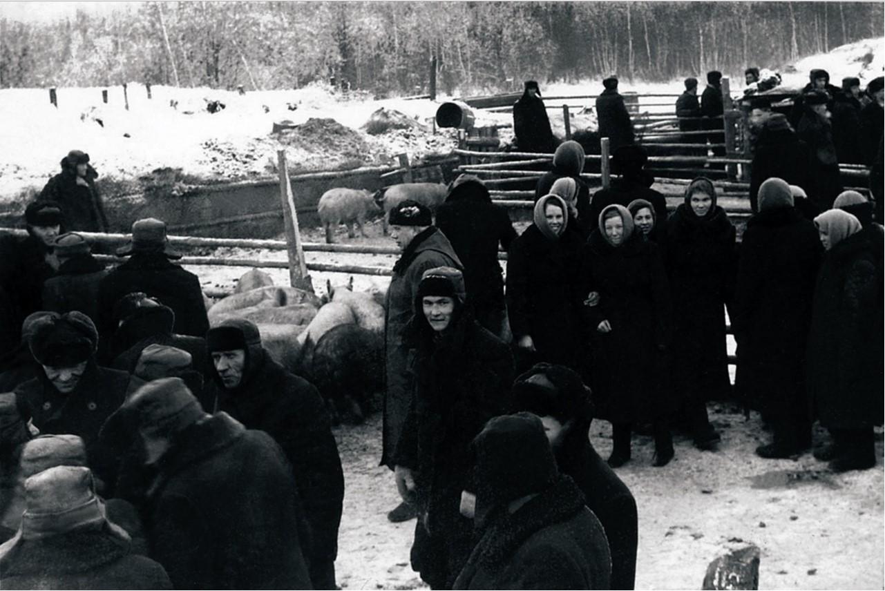 Первая районная сельскохозяйственная выставка. Павильон животноводства (1959)