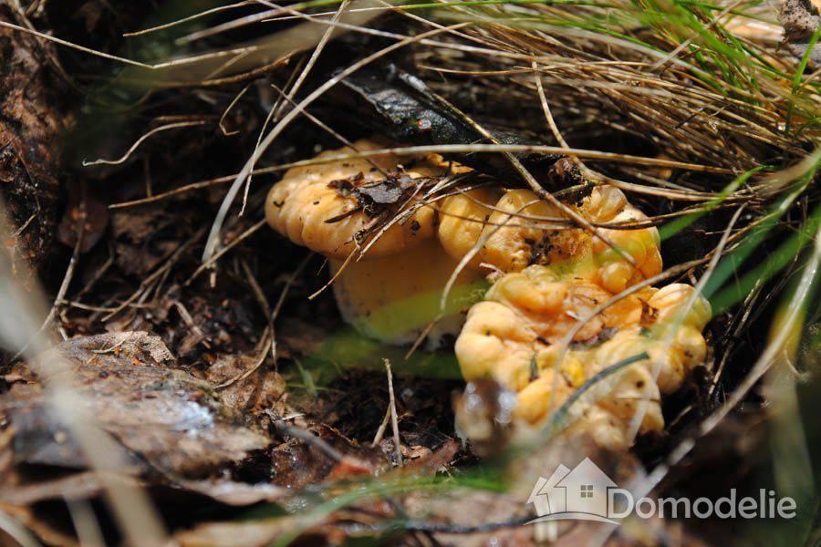 В результате сбора грибов на минном поле житель Станично-Луганского района получил осколочные ранения