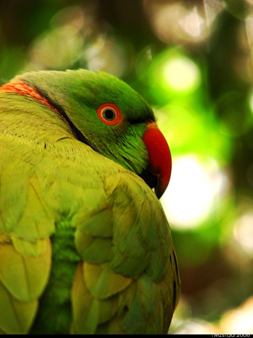Colorful Birds Randall Nicholls