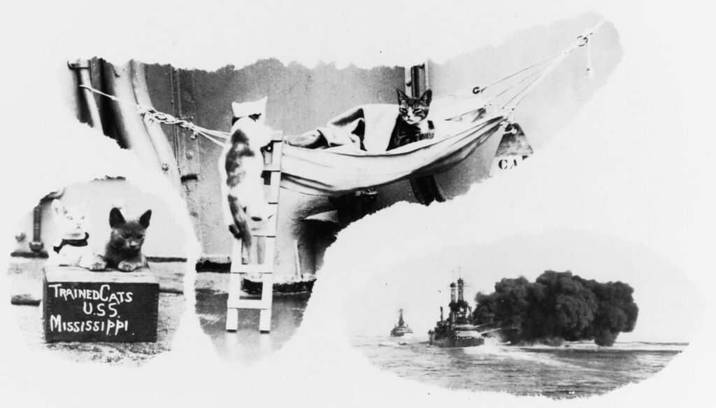 USS MISSISSIPPI (B-41) Photograph of ship's trained cats. Note use of ladder to enter hammock. Lower right vignette shows USS MISSISSIPPI firing.