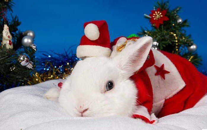 Поздравления к новому году с кроликом