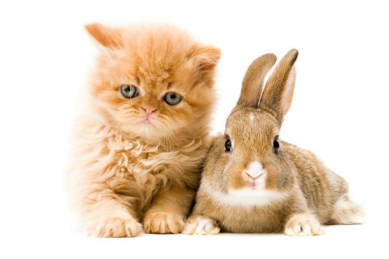 Кот кролик картинках