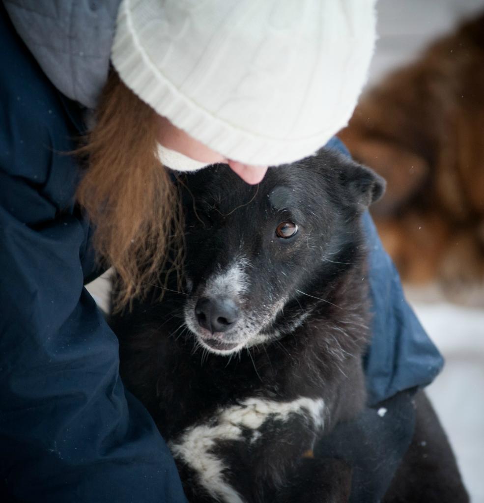 Чернушка собака из приюта догпорта
