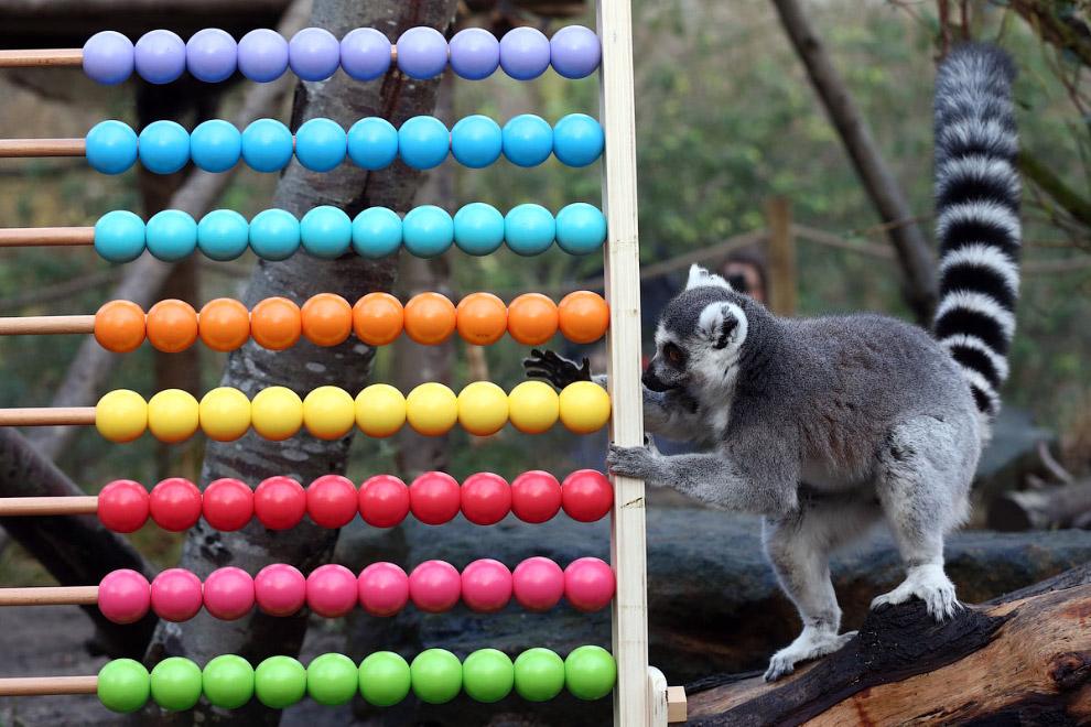 7. Перепись населения лондонского зоопарка – одно из самых известных событий подобного рода, он