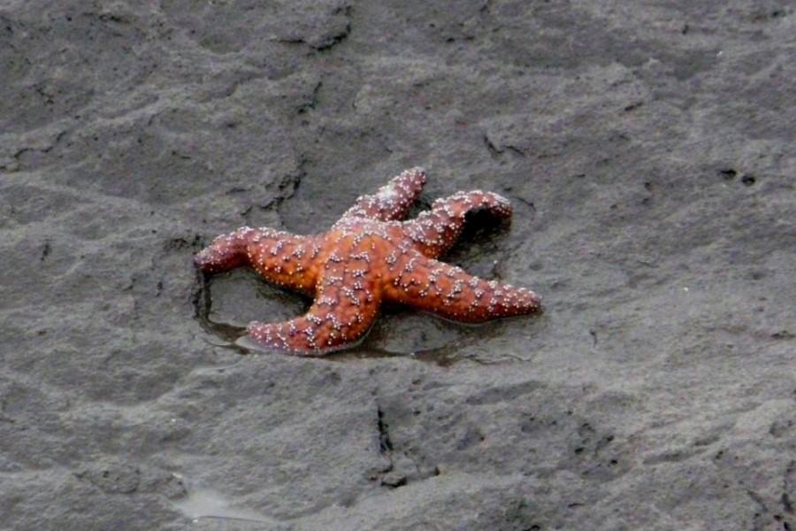 9. Глаза Морской Звезды У морских звезд имеются глаза и расположены они на кончиках их рук. Благодар