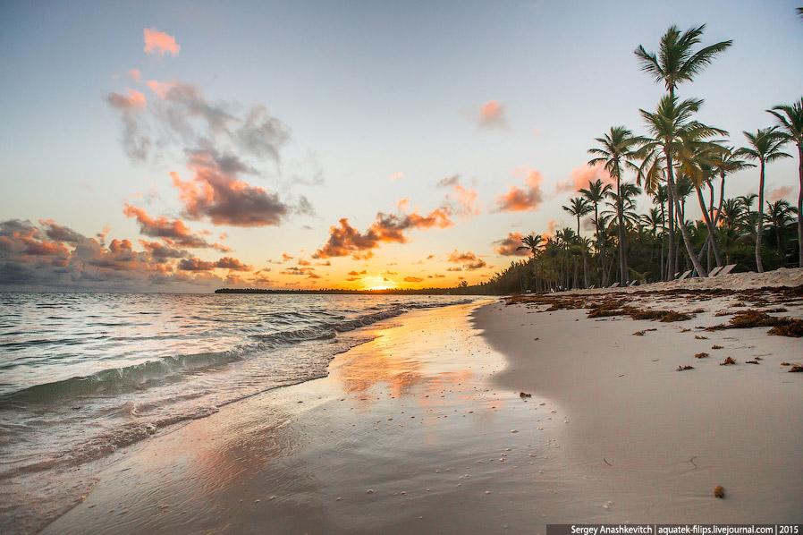 3. Саргасовы водоросли, которые ежедневно приносит океан на эти берега в последние годы — насто