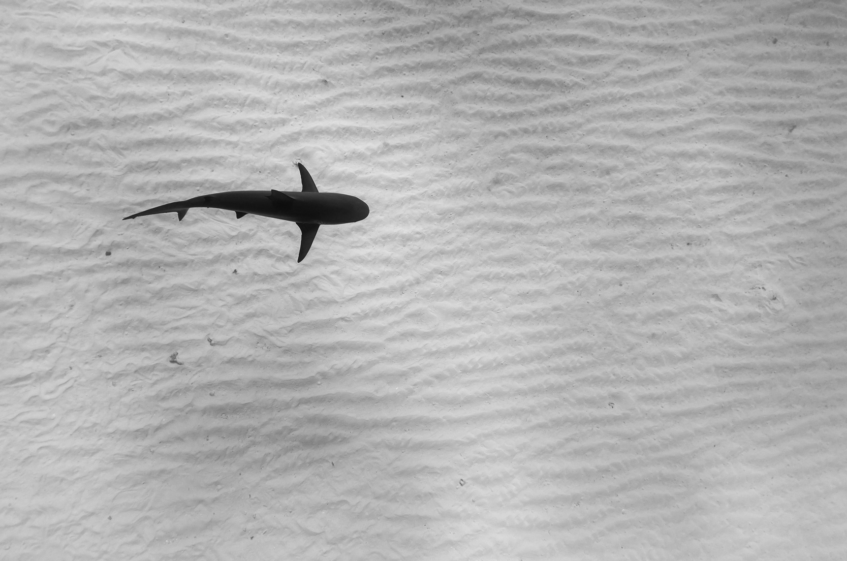 Подводные фотографии Тода Бретла (Todd Bretl)