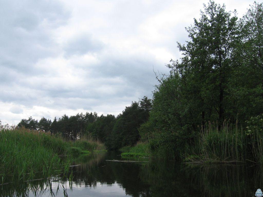 Сосновый лес на берегу Ворсклицы