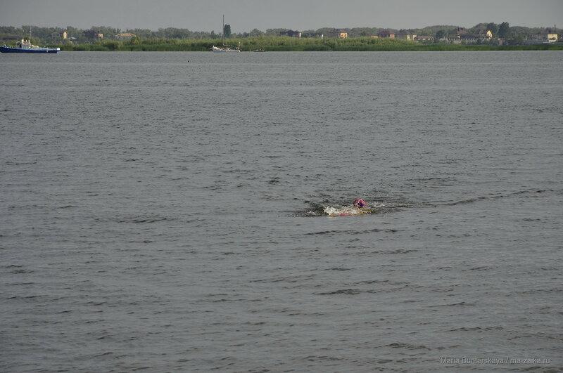 Заплыв через Волгу, Энгельс-Саратов, 13 августа 2016 года