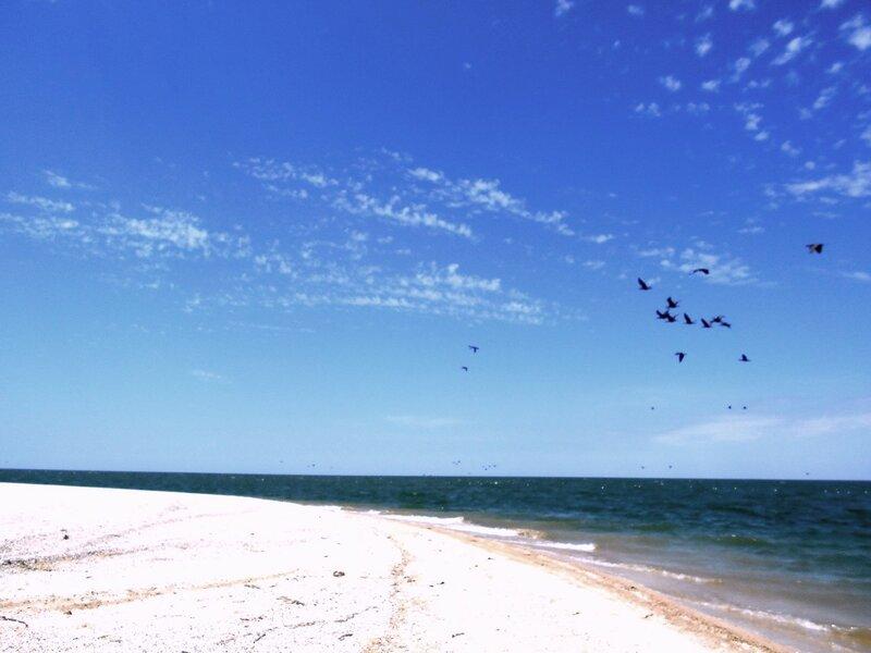 В день летний... у моря ... DSCN6718.JPG