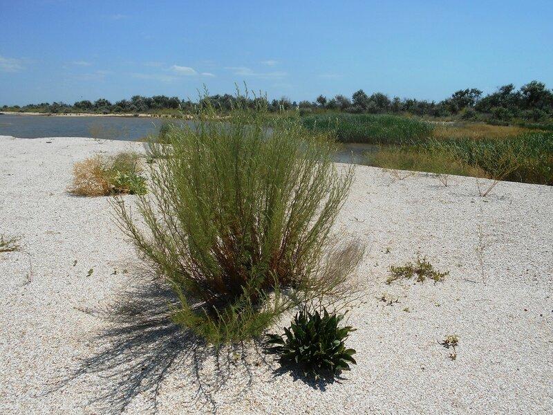 На песках ... DSCN6744.JPG