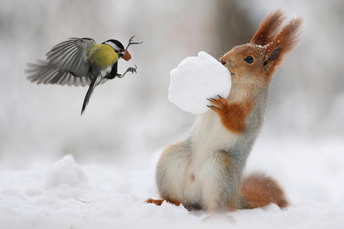 Наглая птица украла орех у белки
