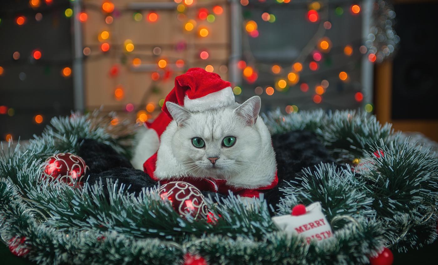 Christmas cat / Natalia Postolatii