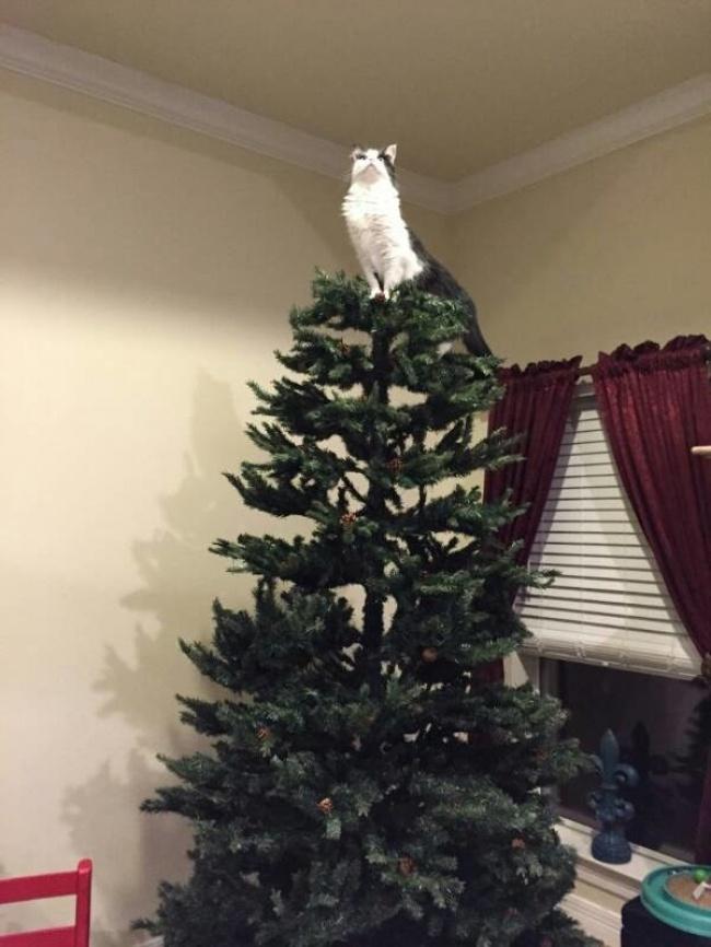 20бесподобных котов, вступивших внеравный бой сновогодними украшениями