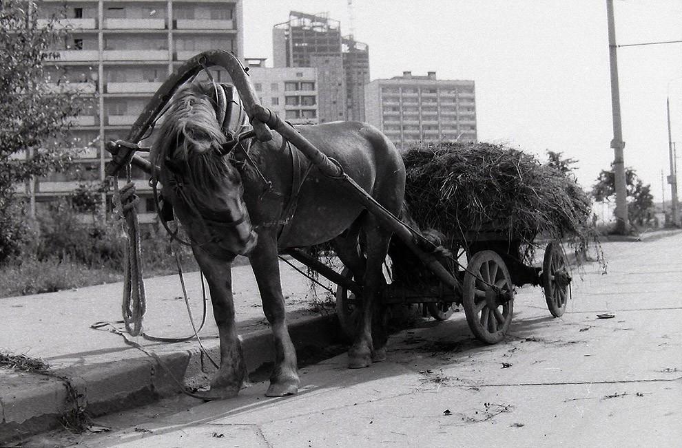 34. Москва, Юго-Запад, 1979 г.