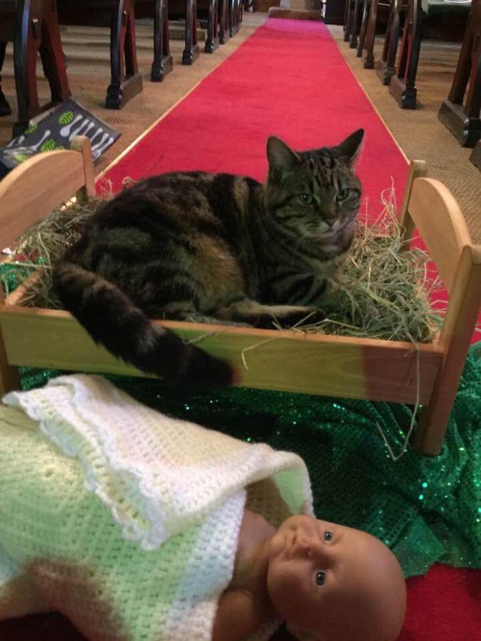 Церковный кот выбросил младенца Иисуса из яслей и лег туда сам.