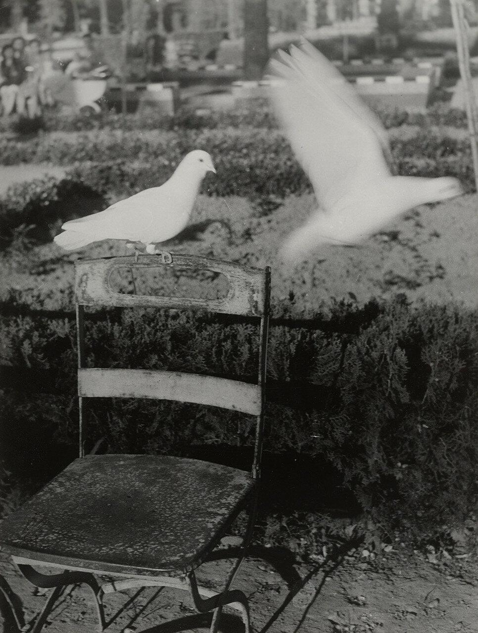 1950. Пара голубей в парке Севильи