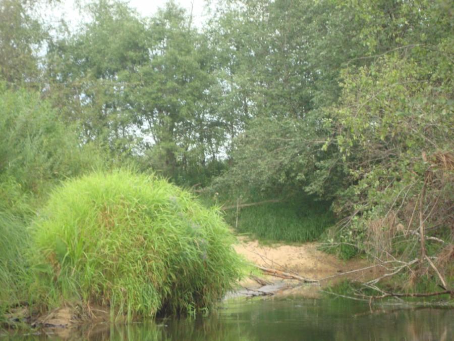 Удобное для рыбалки место.