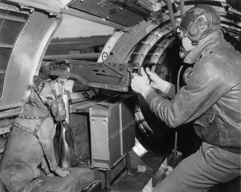 """Sergeant Harold Rogers of the 401st Bomb Group with his dog mascot Mister, in the waist gun position of a B-17 Flying Fortress nicknamed """"Un Petit Peu"""". Passed for publication 2 Jul 1943. This dog Mister belongs to Sgt Harold Rogers, of Miami, Okla, in the US Army 8th Air Force. Mister has already been in five missions, including the raid on Huls, German. His master designed the respirator worn by the dog."""""""