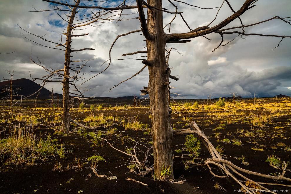 14. Погода была очень суровой — на небе клубились дождевые облака ,закрывая склон Толбачика. Собстве