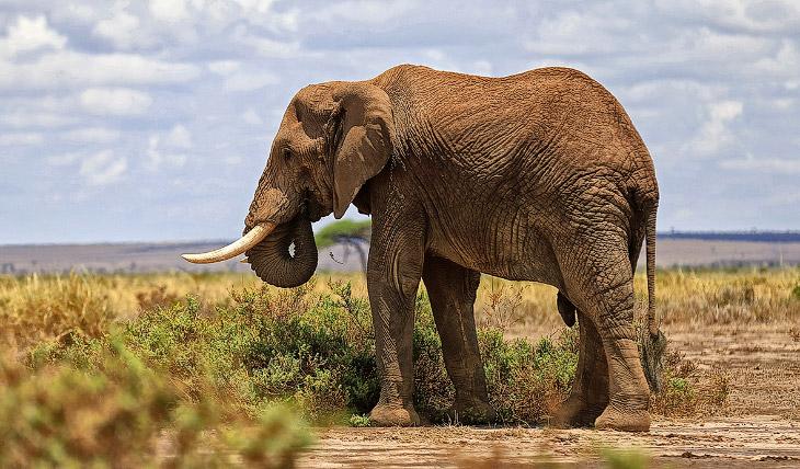 Что за конфликты? люди всё больше и больше захватывают исконные территории диких животных. Слон