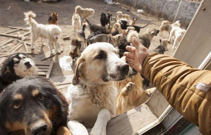 Он выкупил бойню, а на ее месте построил приют. Сейчас своих хозяев ждут 215 собак, но для экс-м