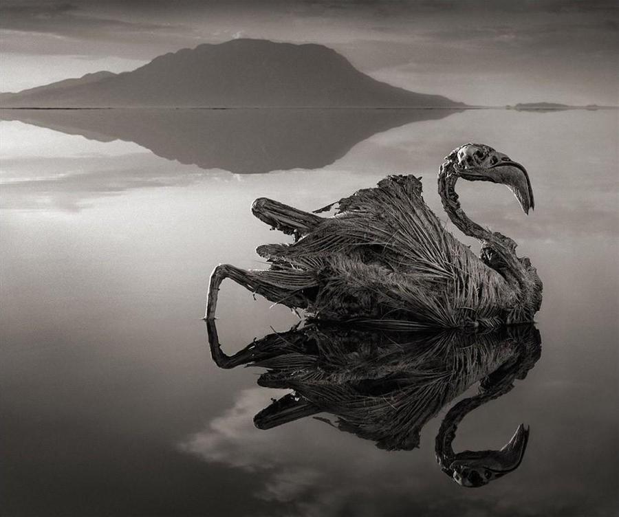 Природный феномен озера Натрон (10 фото)