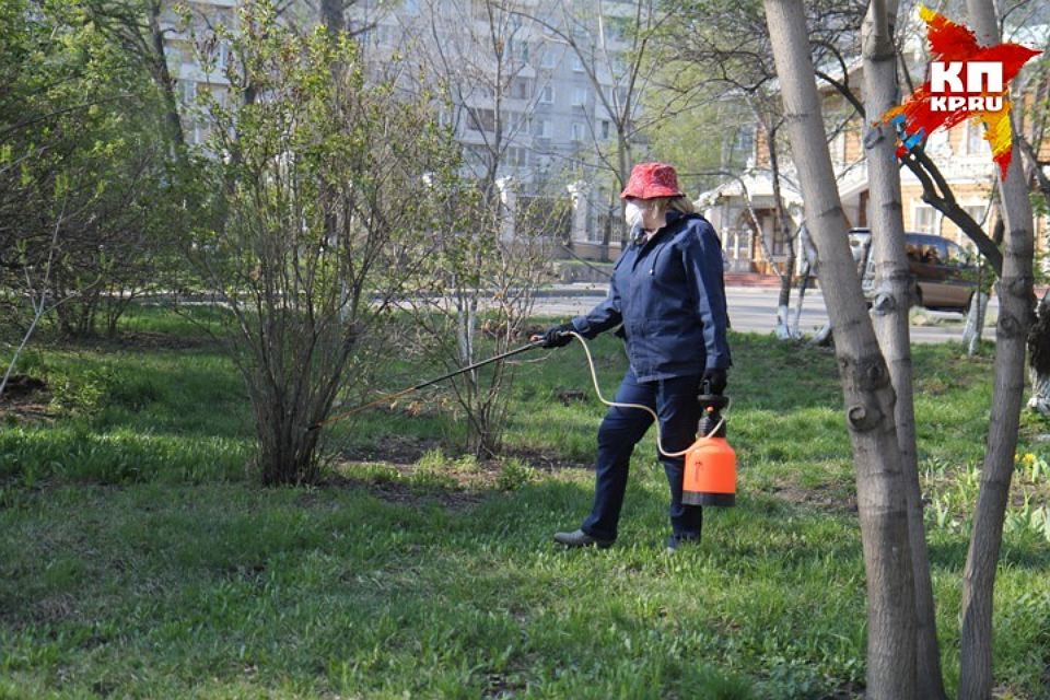 Занеделю вАлтайском крае отукуса клеща пострадало неменее 1500 человек